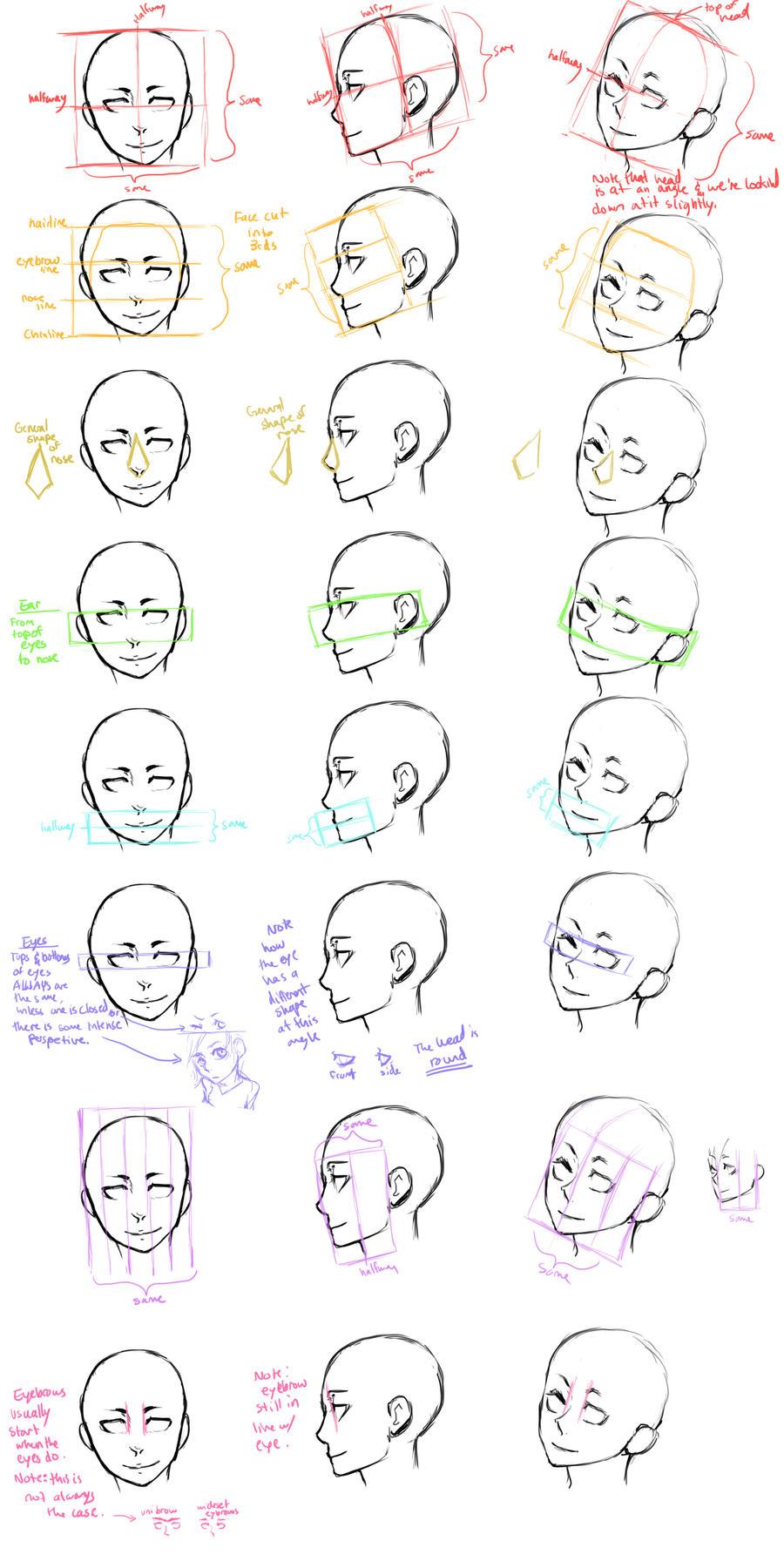 The Head Guide Study by Jotaku on DeviantArt