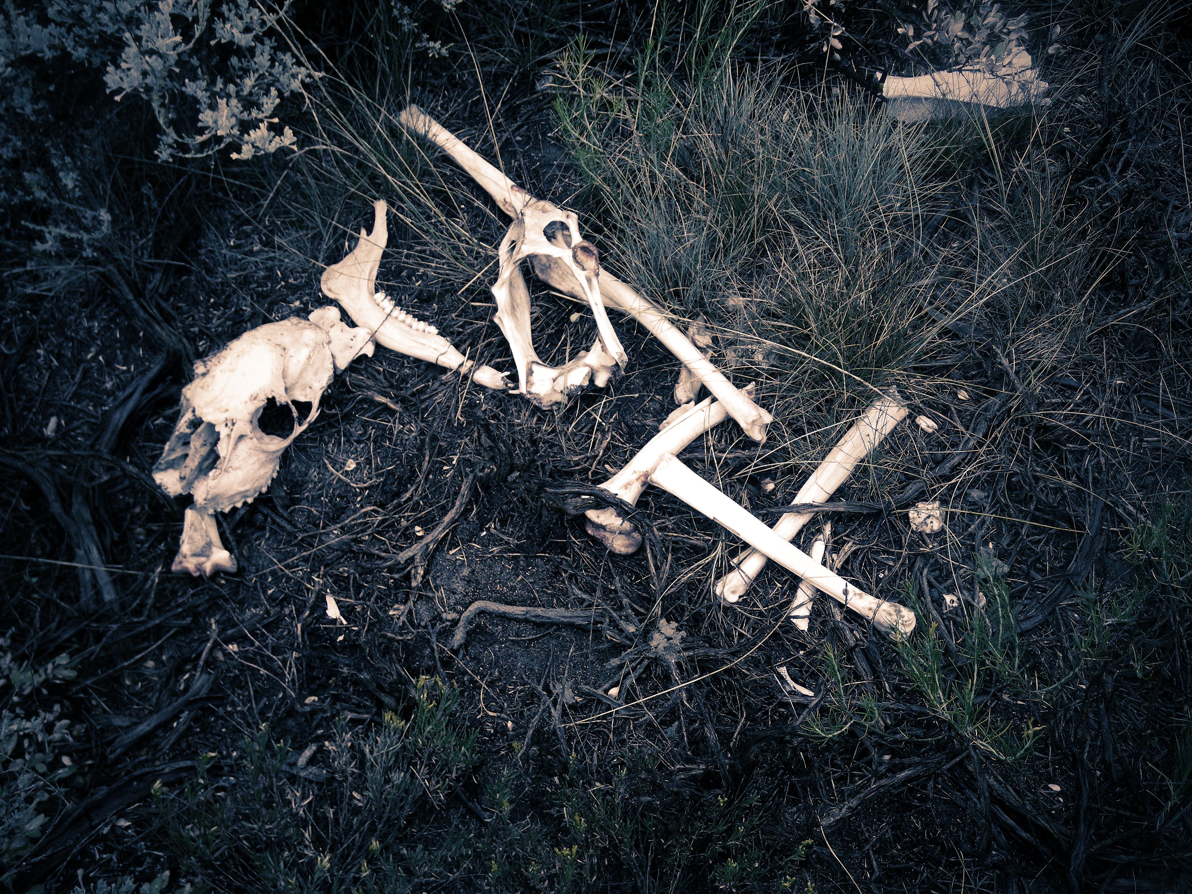Dry Bones by UniqSchweick12