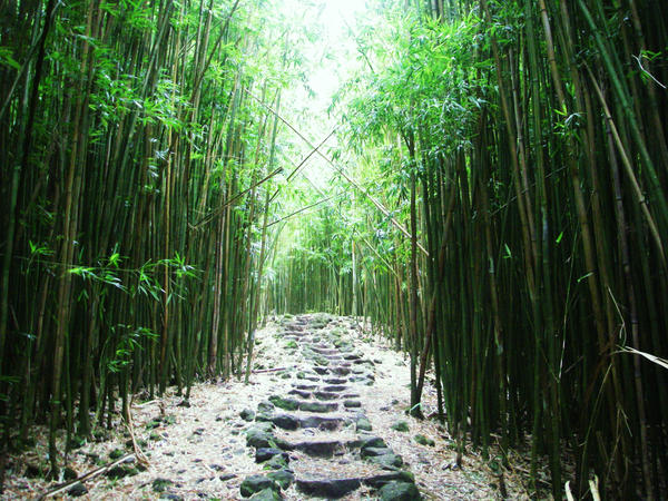 bamboo forest by chrystalization