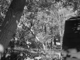 Passive Trees by blakwintr
