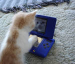 Gaming Kitty by blakwintr