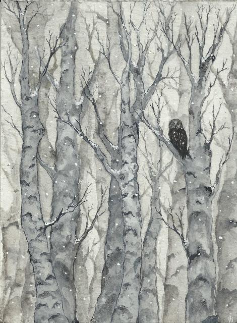 Tengmalm Owl by Chandelours