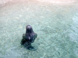 Seal Head Out of Water by ManixTT-stock