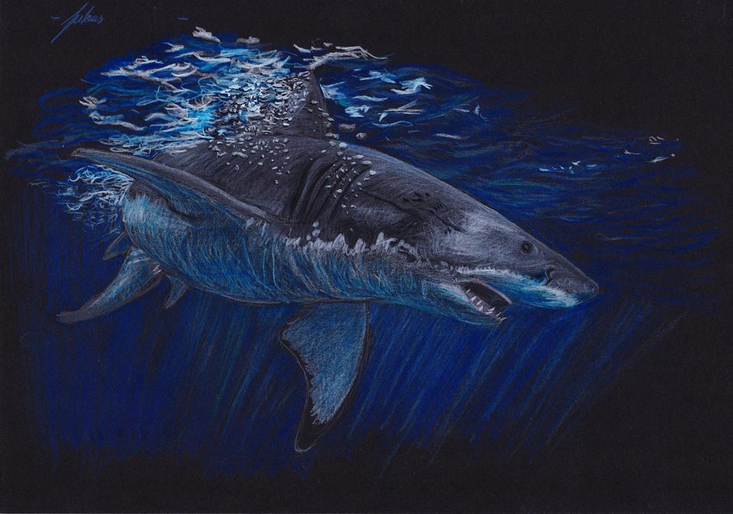 Great White Shark by Hammersteiner