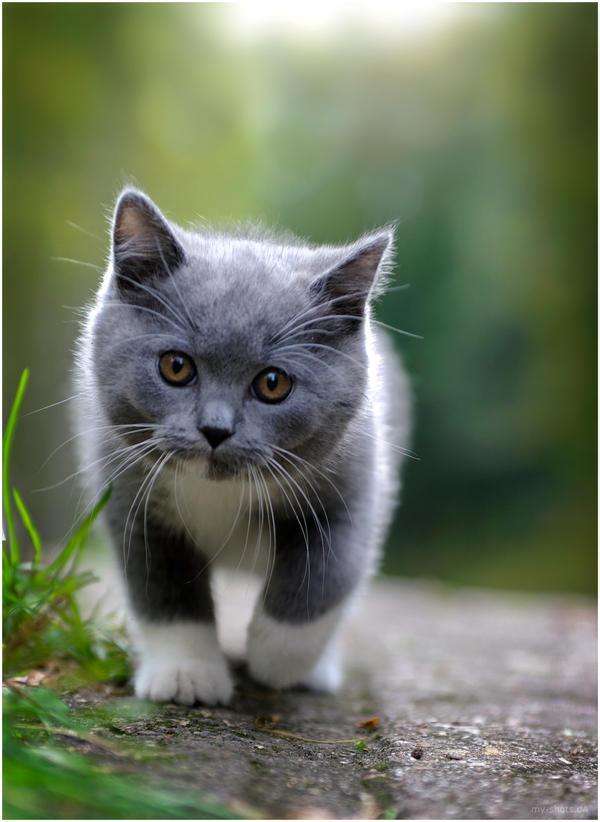 Maji svatki za gnjaviti...[Ne zamerite mi...] Kitten_____by_my_shots-d4x9yw9
