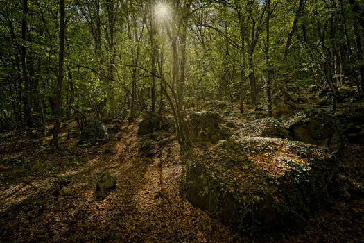 Mountain forest of Mangup-Kale... 4