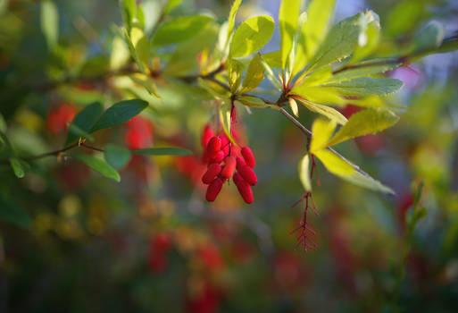 Autumn's breath. Valaam islands _3