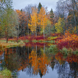 The Colours of Fall _3