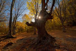 Autumn in the beech forest of Haphal Canyon _22