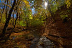 Autumn in the beech forest of Haphal Canyon _24