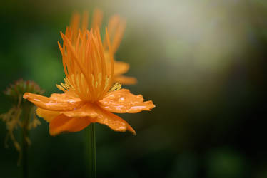 Flowers of Solovetsky Islands
