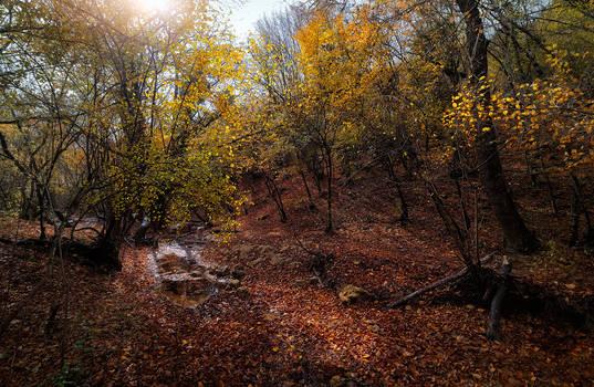 Autumn. Hidden stream.