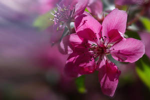 Springtime _3