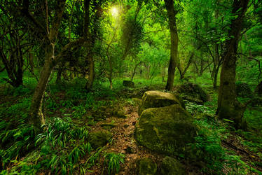 Mountain forest. Mangup-Kale