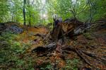 Mountain beech forest