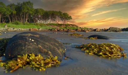 Low tide. Solovetsky Islands.