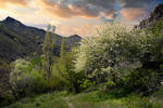 Zelenogorie / Green Mountains