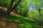 Spring. Mountain beech forest.