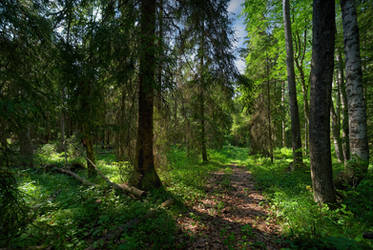 Valaam islands. Forest.