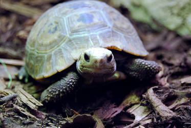 Happy Turtoise by Belafon