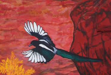 Black Billed Magpie Detail