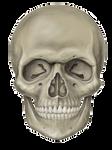Skull With eyes