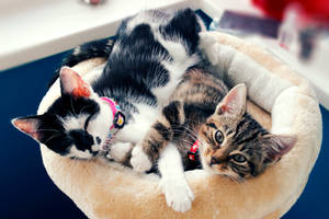 Sleepy Kitties by AmyVsTheWorld