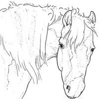 Free Horse Head Lineart by bonbon3272