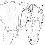 Free Horse Head Lineart