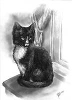 Kitty by bonbon3272