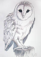 Barn Owl Ink by bonbon3272