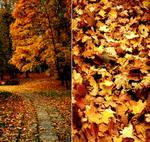 automne by uniqueb0y
