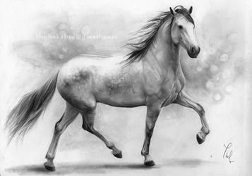 Horse II. by Thubakabra