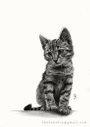 Kitty - Pencil drawing by Thubakabra