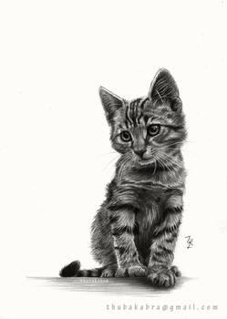 Kitty - Pencil drawing