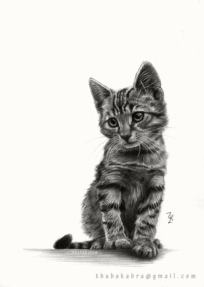Kitty - Pencil Drawing By Thubakabra On DeviantArt