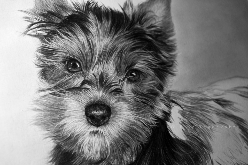 Little doggie pencil drawing work in progress by Thubakabra