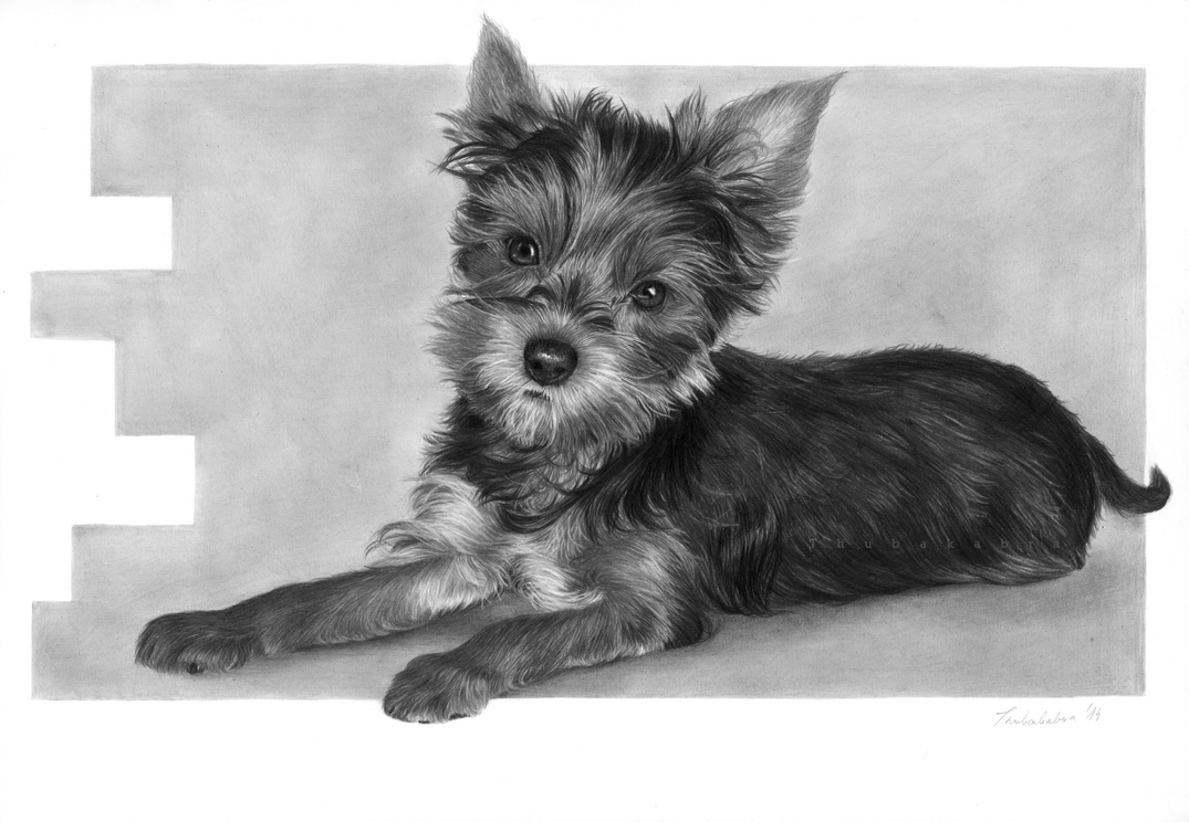 Cute dog pencil drawing by Thubakabra