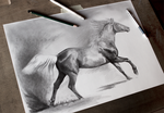 Horse drawing work in progress