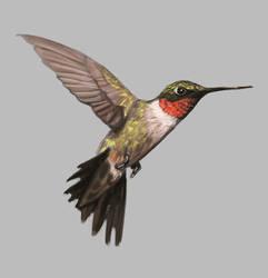 Hummingbird Color Practice