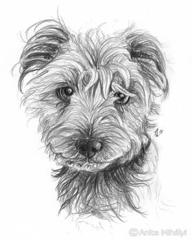 Cute Dog Portrait Custom Pencil Artwork