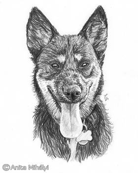 Dog Portrait Pencil Artwork - Custom Pencil Sketch