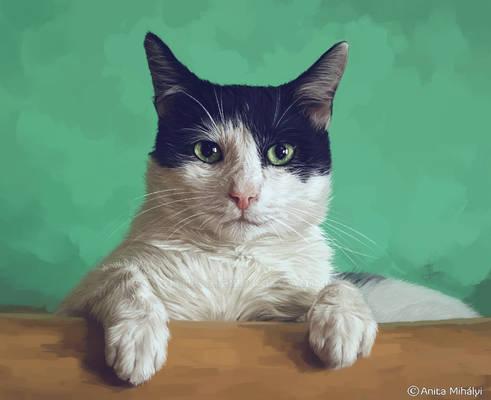 Cat Digital Portrait Painting