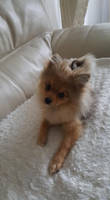 curious doggo