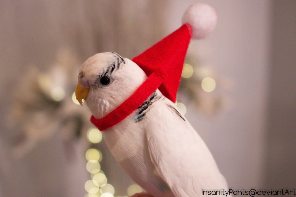 christmas budgie by InsanityPants