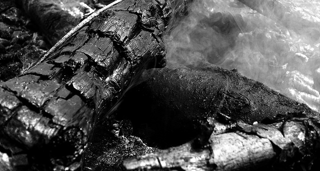 Burnt Tree by OniPhotography