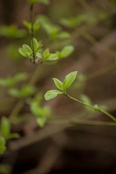greenislife