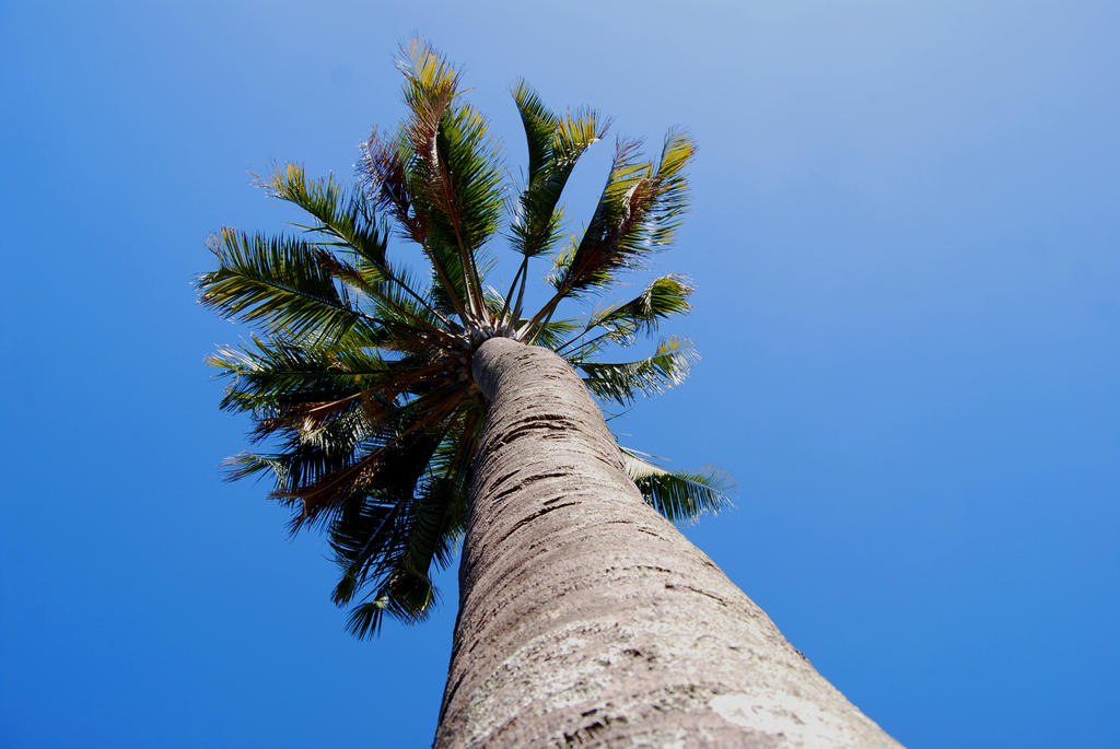 palm by Paco-Meijer
