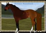 Morozov Warmblood Import   #013 - CLOSED
