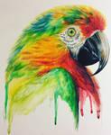 Parrot Rainbow